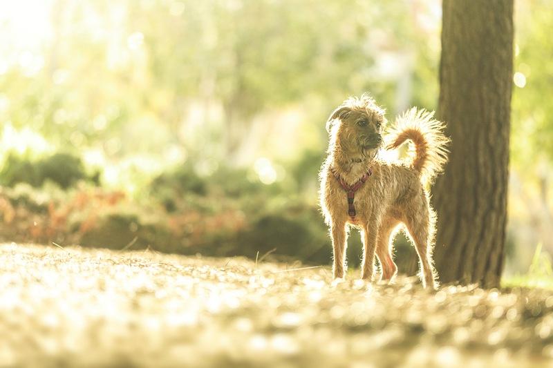 Fotografía de animales de compañía en Valencia