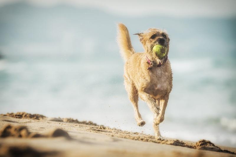 Fotografía de mascotas en Valencia