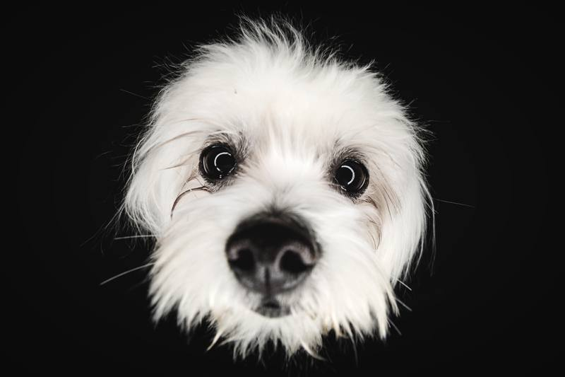 Fotógrafo de mascotas en Valencia