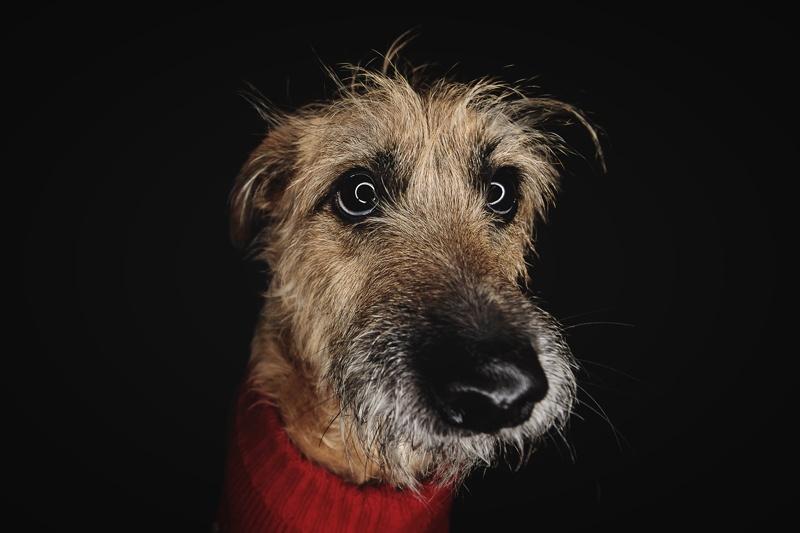 Fotógrafo de perros en Valencia