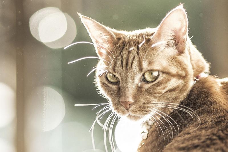 Fotógrafo de gatos en Valencia