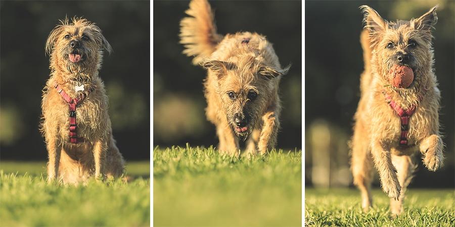 Fotografo de animales en exterior